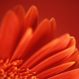  Beautiful Red Flower Close-Up