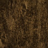  Old Tree Bark Texture Free