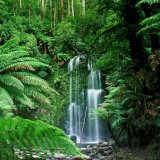 Beauchamp Falls Victoria Australia