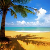  Tropical Palm Tree On Beach